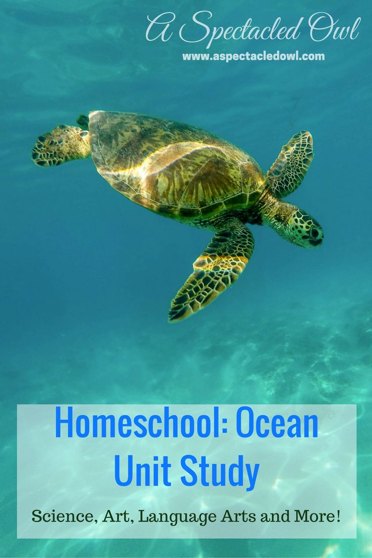 """Homeschooling: Ocean Unit Study - This Ocean Unit Study can be adapted for all grade levels, Preschool through 6th. I've included Science, Art, Literature, and """"Everything Else"""". For Math, you can do any type of counting project with fish, dolphins, or any sea creature!"""