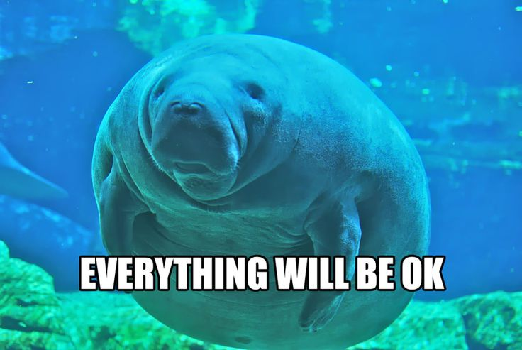 Here is a calming manatee for you! (:3)