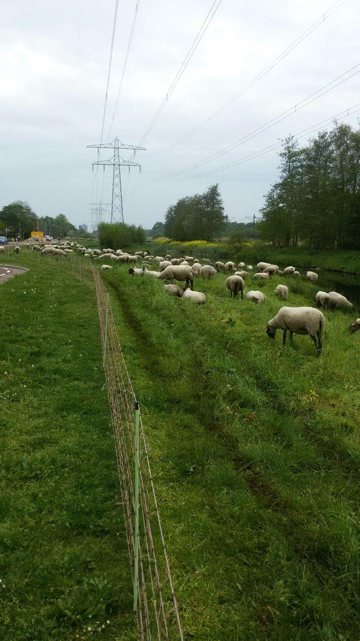 Leidschendam, Zuid-Holland.
