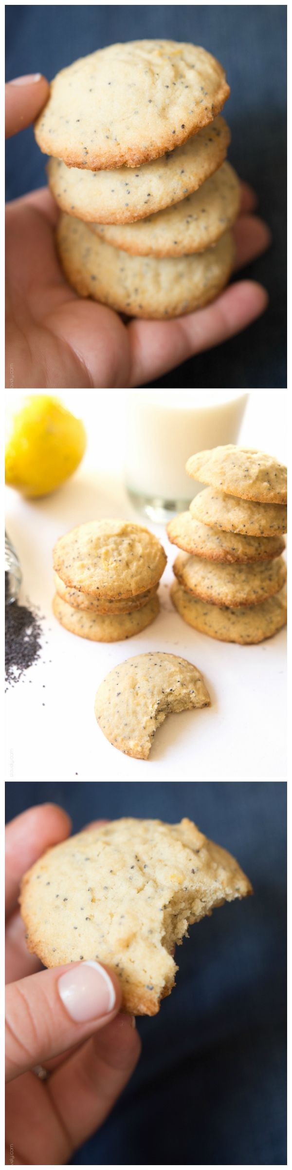 Lemon Poppy Seed Cookies - the perfect cookie for spring!