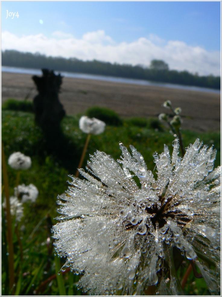 Ile de Behuard vue sur Loire