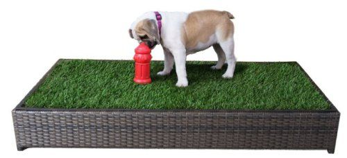 5 Indoor Doggy Potty Solutions That Will Free You From The Leash