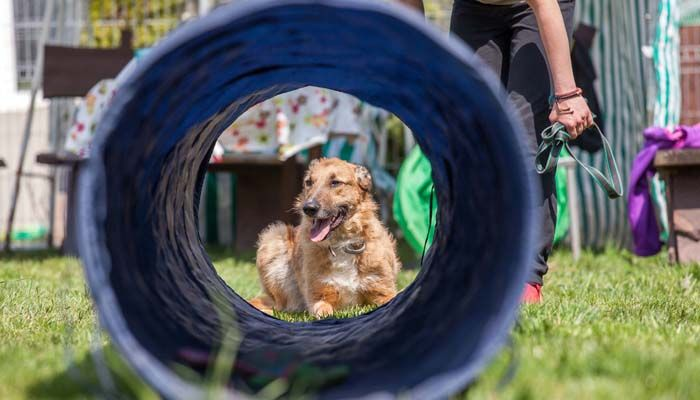 Best Obedience School for Dogs in the US & How to Pick the Right One