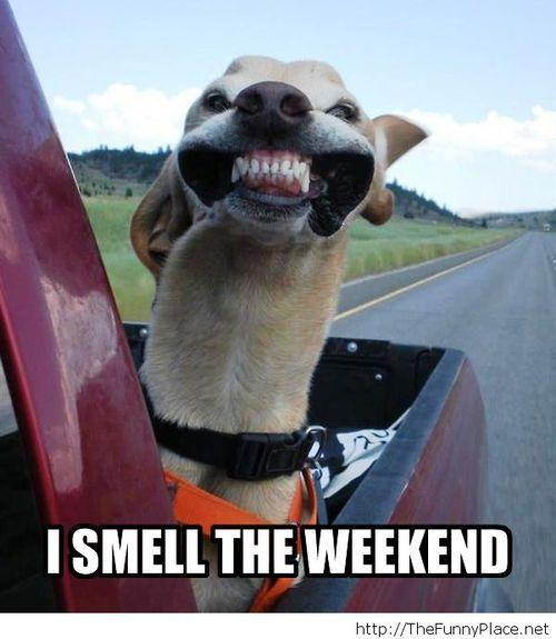 funny dog weekend