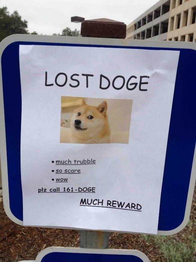 Lost Doge Much Reward