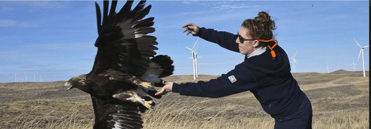 Duke Energy to install avian protection program at Wyoming wind farm