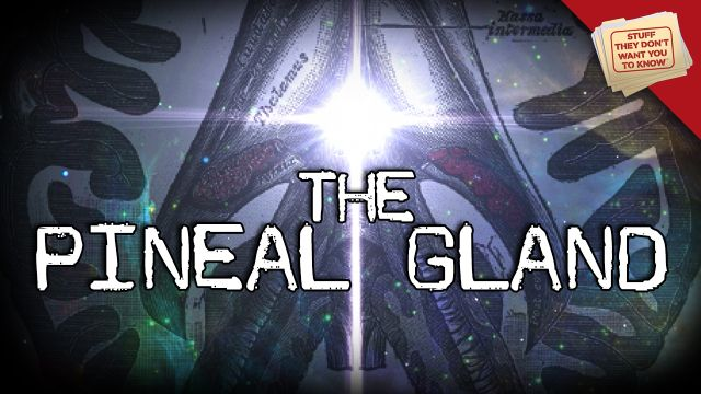"""The Pineal Gland: Mysticism and Neuroscience - Is the pineal gland the """"third eye""""? Are any of the more outrageous rumors about it true? Find out in this Stuff They Don't Want You to Know video."""