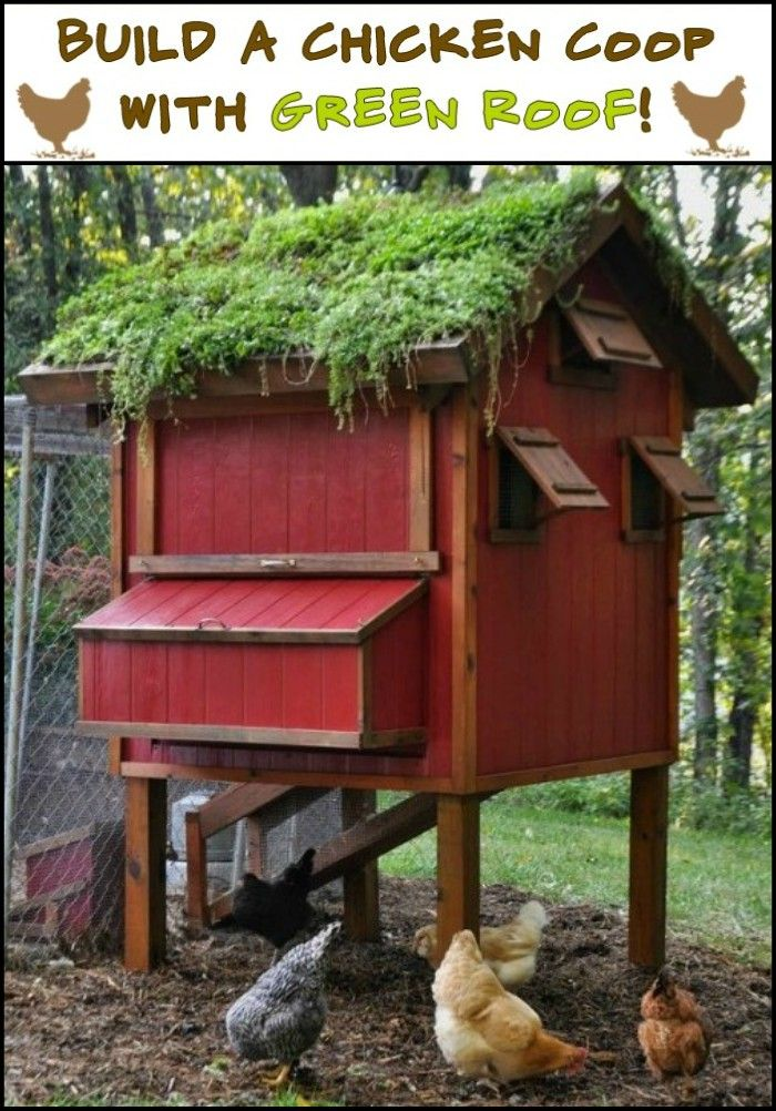 Raise Chickens And Grow Produce at The Same Time by Building Your Own Chicken Coop With Green Roof