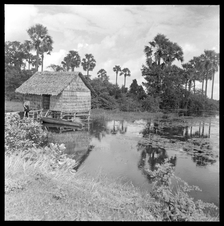 """""""House Built on Flood Plain.""""  Riverine communities or #fishingvillages are one of the major types of village communities in #Cambodia. These communities are characterized by a mixed economy; they are self-sufficient in rice and fish, and their diets are supplemented by seasonal market produce."""