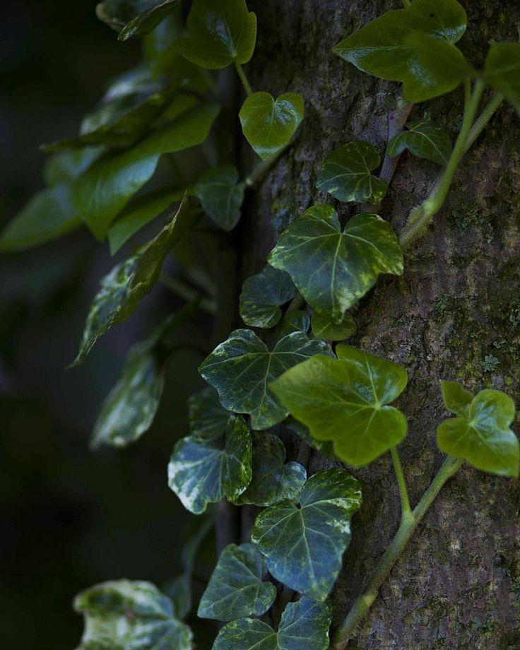 """ladymantheniel: """"🌿Mother Nature 💚 Naša Matka….matka príroda dokonalá čarodejnica…jej dary sú našim bohatstvom prijmite ich srdcom….rozkvitnute aj vy 😊 #natural #naturephotography #nature #inforest..."""