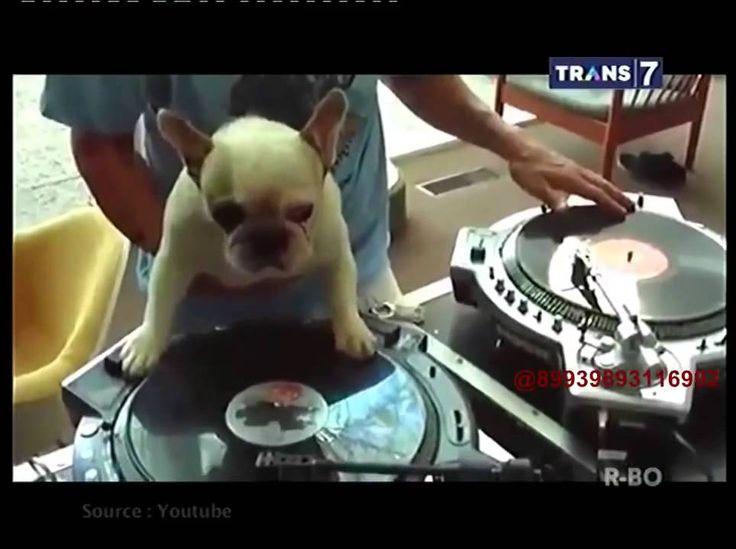 Asli Berita 26 Juli 2015 - VIDEO On The Spot   7 Hewan Bermain Musik