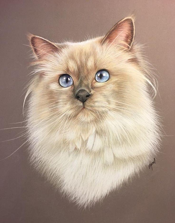 места портрет кошки картинки предложенные здесь