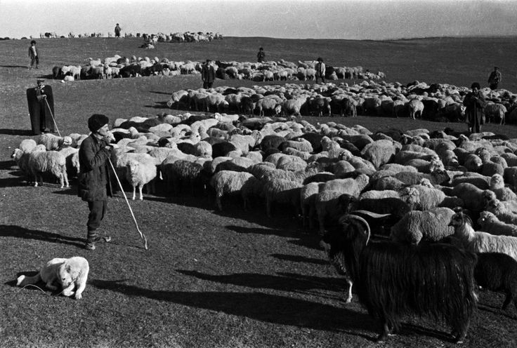 Shepherds and their flocks, 1938. Sevan district, Armenia