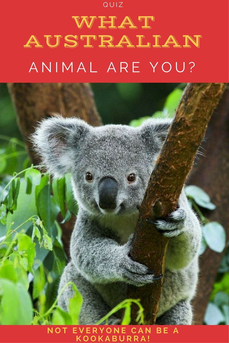 There are many fascinating and totally unique animals that live entirely or mostly in Australia. Which of these animals from the land down under are you most like?