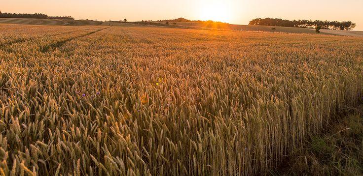 Fields of Bornholm