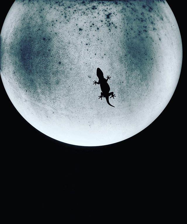 Moon gecko #moon #gecko #notreallythemoon #realgecko #fun #blackandwhitephoto #photooftheday #fun #silly #sky #lucky