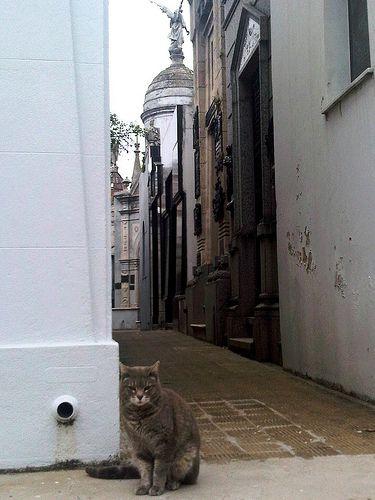 Gato en cementerio Recoleta, Buenos Aires