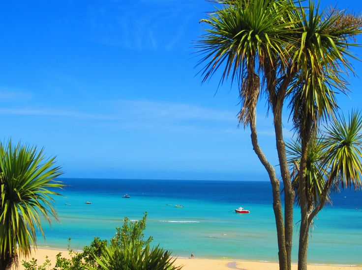 Summer in St Ives by Stephen Ashberry. #palmtrees #beach #cornwall