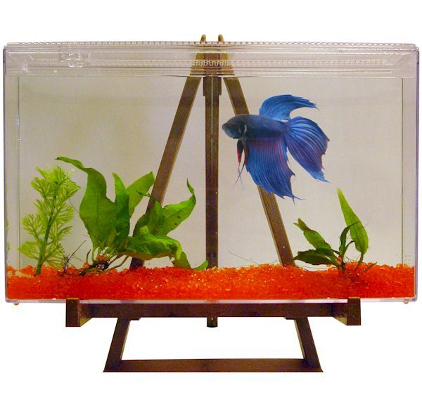What better way to display the vibrant colors of a betta for Unique betta fish tanks