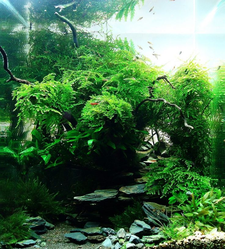 78 Best Images About Aquascape On Pinterest Cichlids