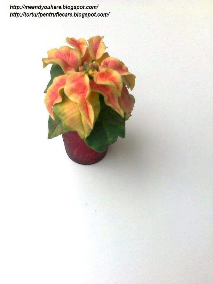 small poinsettia