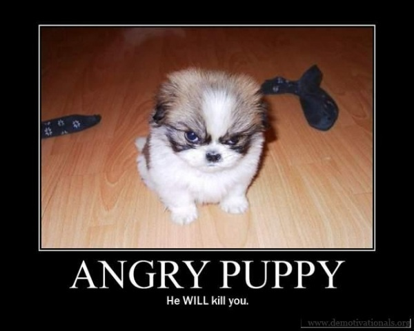 Too funnyPuppies, Funny Dogs, Funny Animal Pictures, Funny Pictures, Pets Photos, Dogs Photos, Shihtzu, Dogs Pictures, Shih Tzu