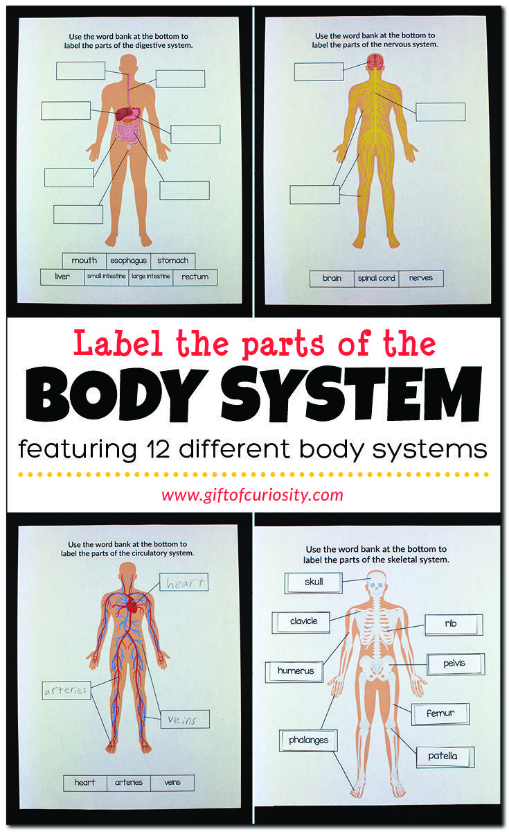 Label the Parts of the Body System   Body systems worksheets [ 1200 x 735 Pixel ]