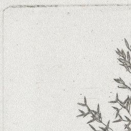 William Henry Fox Talbot. Wheat. c. 1854 | MoMA