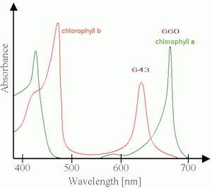 Картинки по запросу хлорофилл а спектр