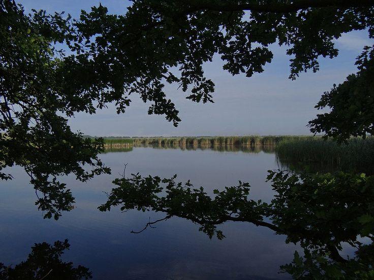 Milicz Ponds