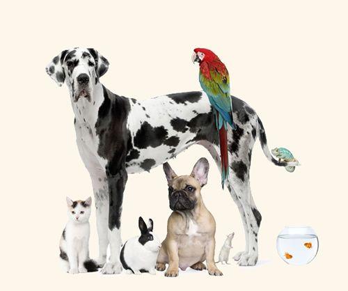 Imágenes de animales bonitos ☺,divertidos y graciosos para facebook. Fotos de animales lindos, tiernos y juguetones.