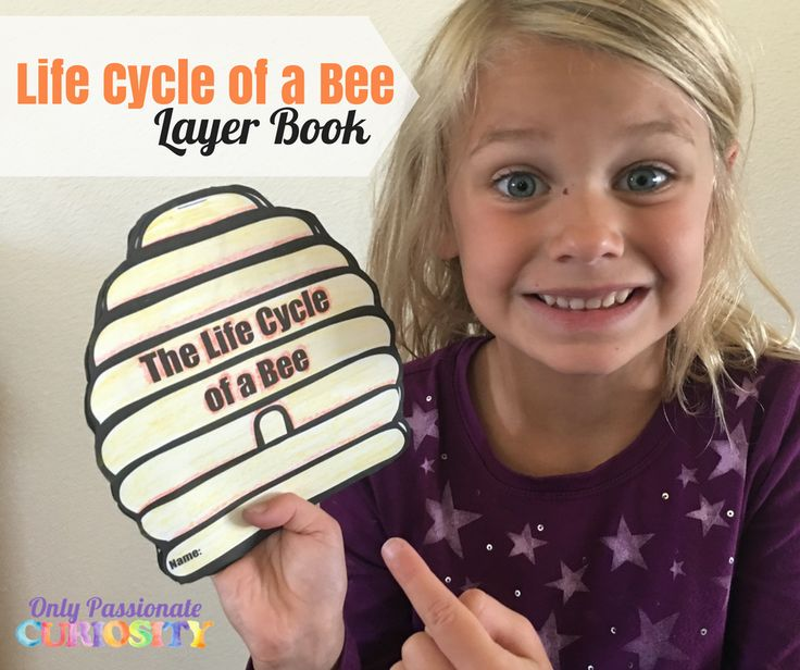 Printable Life Cycle of a Bee Layer Book – Only Passionate Curiosity