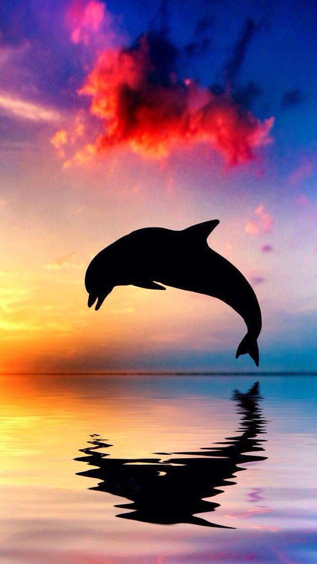 So pretty! #background #pretty #dolphin #sunset