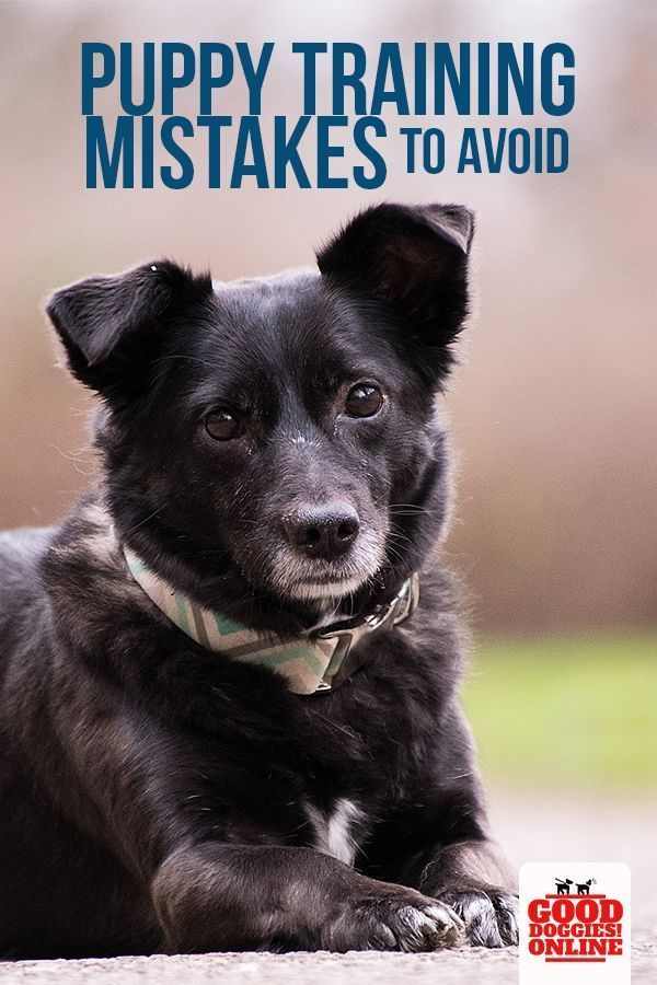 Puppy Training Mistakes That You Should Avoid Good Doggies Online Puppy Training Tips Training Your Dog Dog Behavior