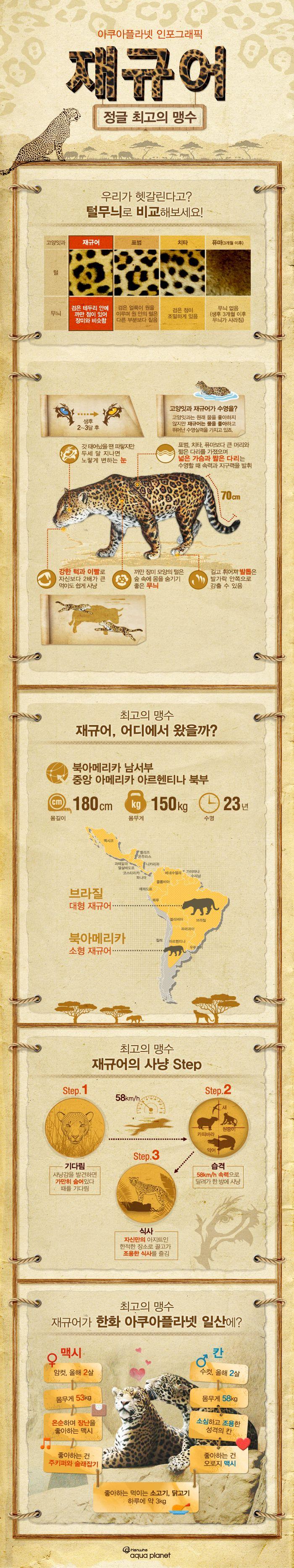 정글 최고의 맹수 '재규어'에 관한 인포그래픽