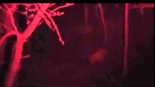Смотреть онлайн видео Охота на Кабана ночью  точный выстрел!