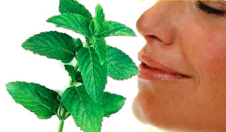 5 utilisations stupéfiantes de la menthe poivrée pour être en meilleure santé