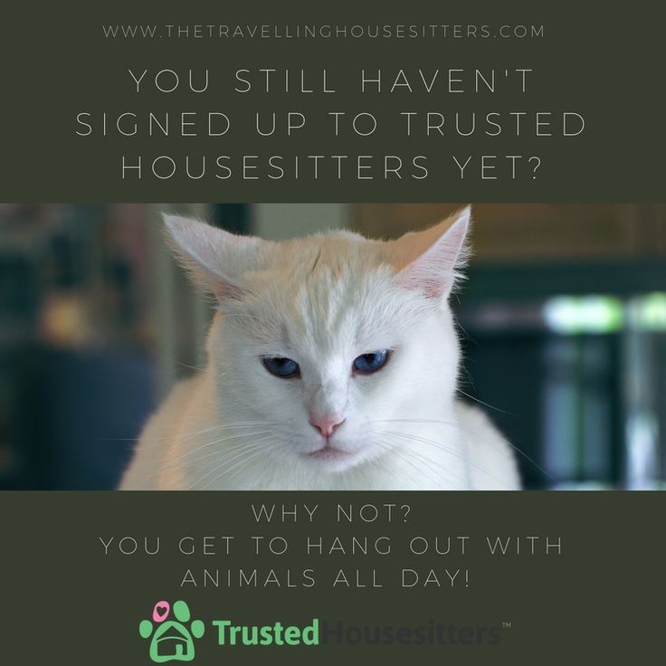 Set Up A Profile On Trusted House Sitters And Start Your House Sitting Journey Today How To Be A Pet Sitter H Pet Sitting Business Pet Sitters House Sitting