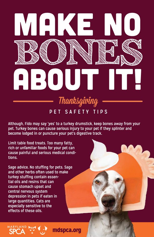 Thanksgiving Safety Tips for Cats and Dogs from the