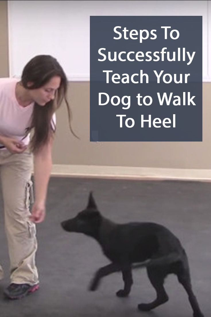 Tips And Info For Dog Training Online If You Want To Adopt A Dog