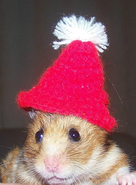 Best Hamsters Images On Pinterest Beautiful Colours And Hamtaro - Hamster bartenders cutest thing youve ever seen