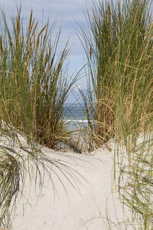 stranden zee terschelling - Google zoeken