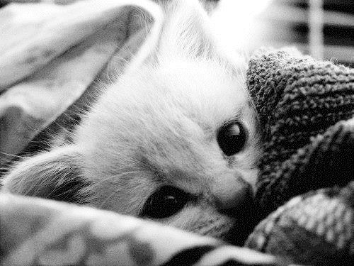Adorable kitten wrapped in a blanket what a beutiful baby aww :)