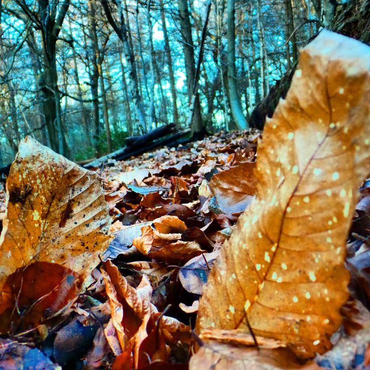 Woodland walk at Tilgate Park.. #woodland #dense #trees #landscape #treeline #woodland #nature #tilgatepark #crawley #sussex