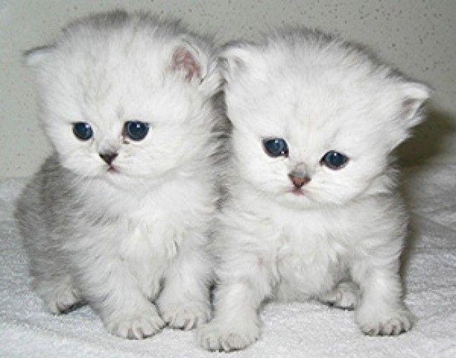 Dieren - Katten