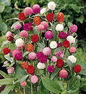 High Heat Flowers For Hot Summer Areas - maybe i can get something to actually live under my mailbox all summer!