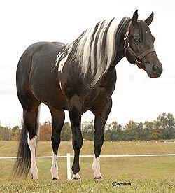 paint quarter horses | Rockin M Inc - World Class Paint Horses and Quarter Horses For Sale