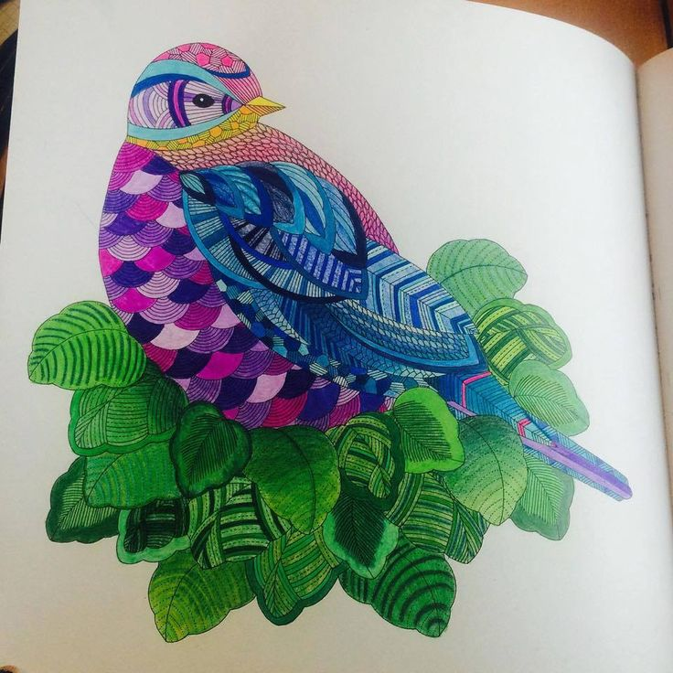 Coloring Ideas Bird Color Pencil DrawingsColoring BooksColouringAnimal Kingdom