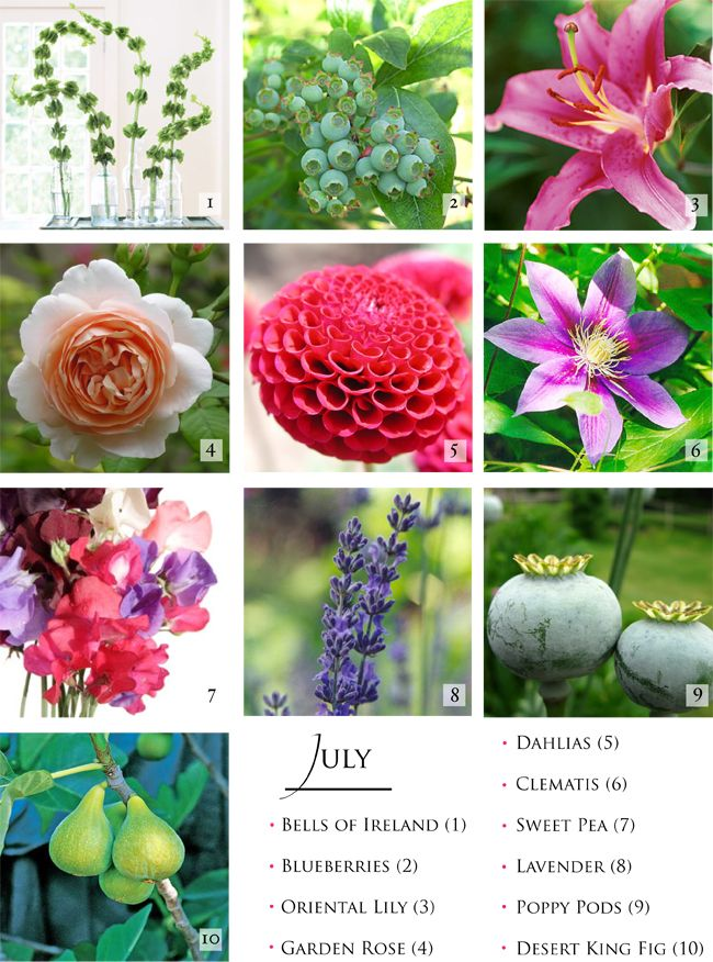 June -July Flowers The dahlias and sweet peas are varied in colour, the rest, excluding roses that I know you don`t want, stay near the colour in photo