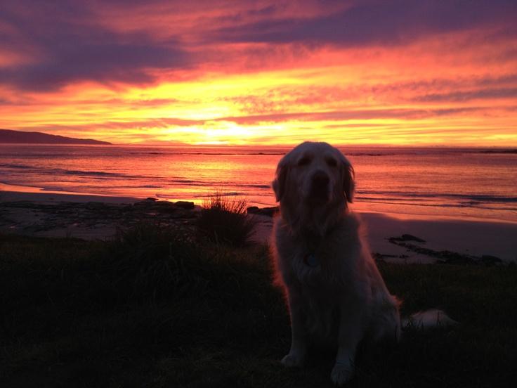 Molly enjoys a sunrise at Marengo Beach near Apollo Bay on the Great Ocean Road